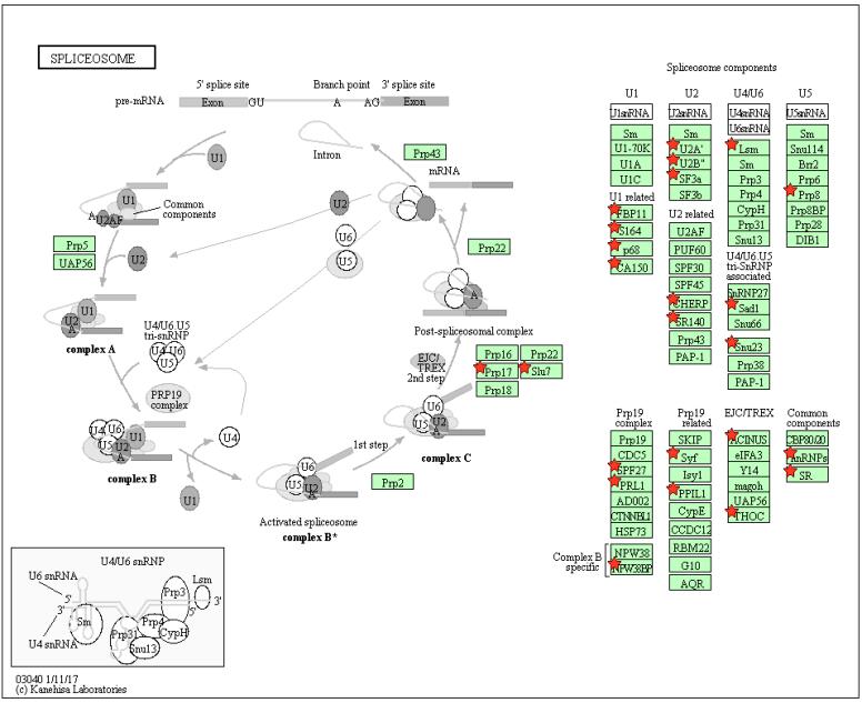 S3-spliceosome