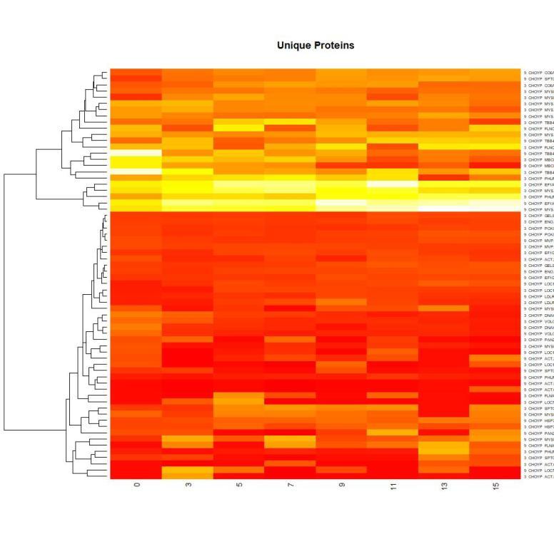 heatmap-protclus